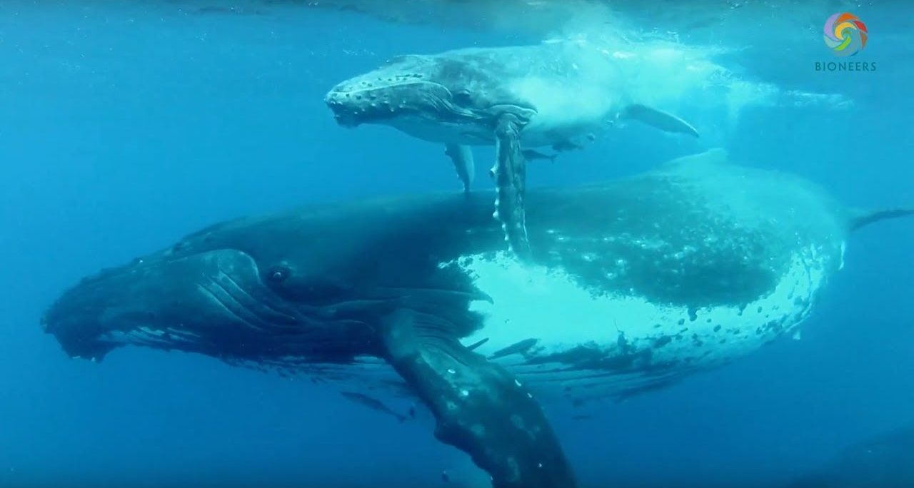 Making Contacts – The Intelligence of Whales
